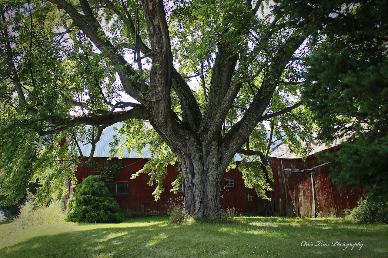 Aged to perfection in Sodus (photo)